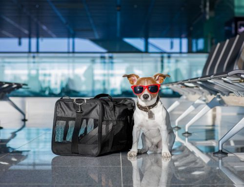 What kind of Dog Carrier is Best for Your Canine Friend?